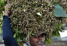A miraa trade in Maua. /FILE