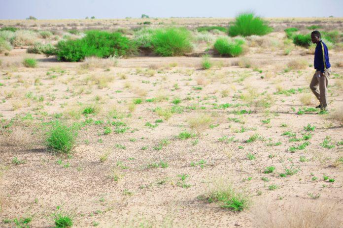 Somalia gets ready for a long fight against Desert Locust