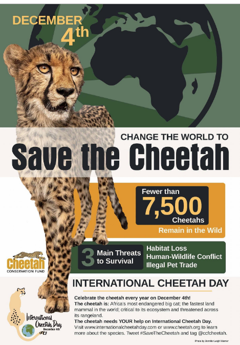 Cheetah Conservation Fund Leads Ninth Annual Global Observance of International Cheetah Day
