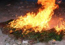 Puntland police destroy khat smuggled from Ethiopia