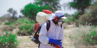 Somalia and FAO strengthen cooperation to curb the spread of desertlocust