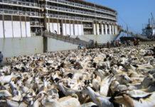 Saudi Arabia lifts ban on Somalia's livestock imports