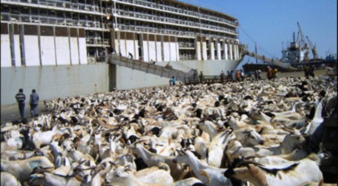 Saudi Arabia lifts ban on Somalia's livestock imports