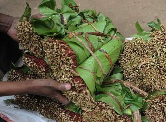 A picture of Khat.PHOTO/Reuters