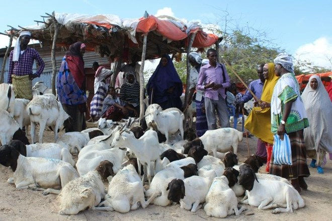 People buy sacrificial sheep and goats for the Muslim festival Eid STR AFP