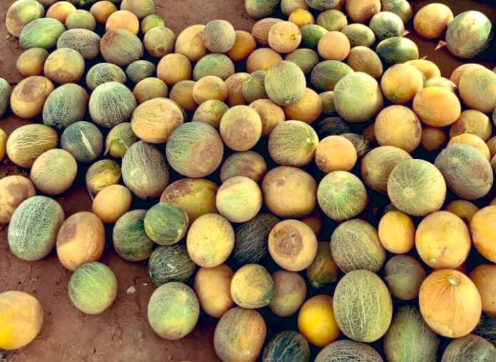 food scarcity in Somaliland